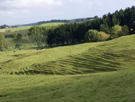 Cattle and Sheep pasture and Whenuanui Farm, Auckland, New Zealand